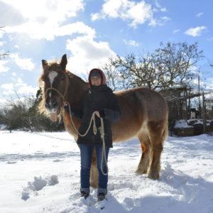Cavallo Murgia Innevata